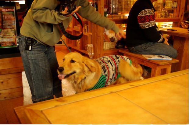 dogwood9