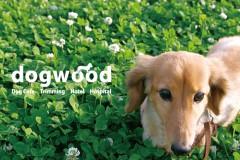 dogwood_eye